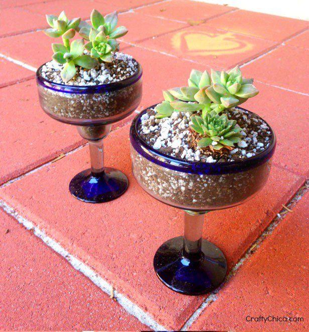 cactus-gardenA