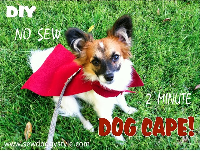 no sew dog cape