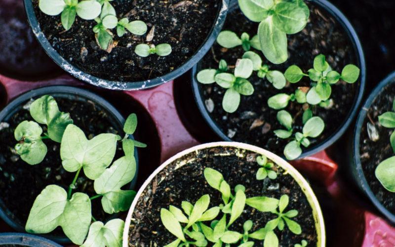 How to plant an herb garden. #craftychica #herbgarden